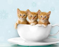 cute cats in a pottery cup