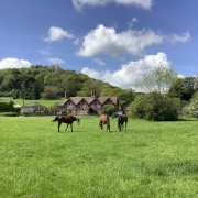 view of the eastnor pottery with horses out the front